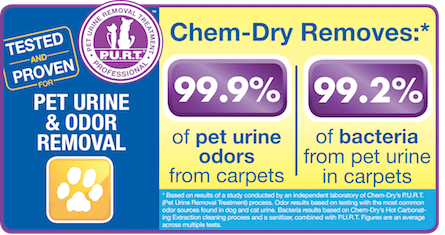 Pet Urine And Odor Removal Outer Banks Nc Kill Devil