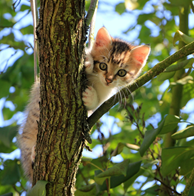 Cat in a Shady Tree